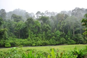 jungle-view-from-room
