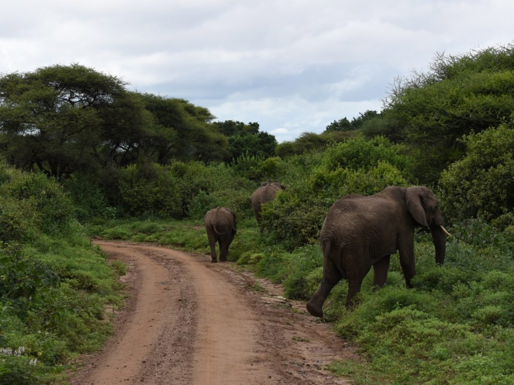 Elephants in Lake Manyara national park, Tanzania