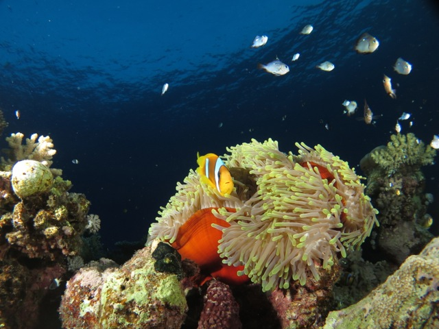 Coral at Red Sea, Egypt