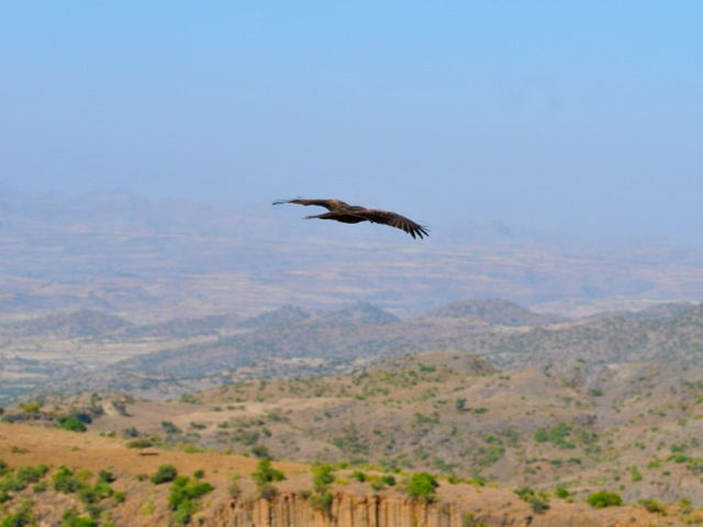 Kite and scenery around Lalibela, Ethiopia