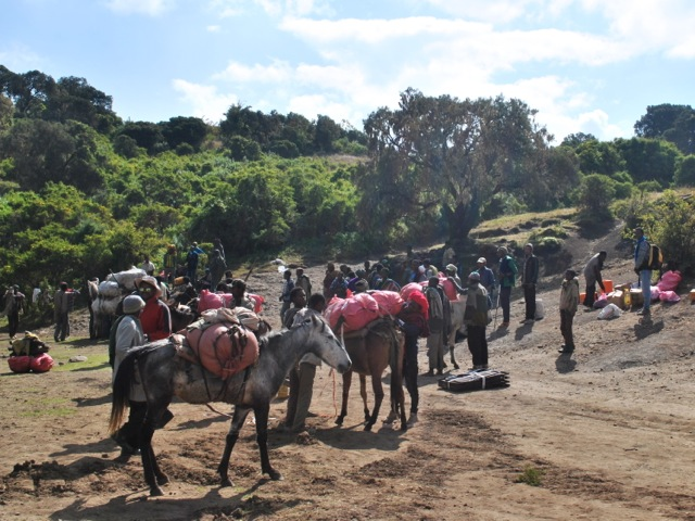 Mules get loaded to carry supplies for multi-day tracks, Simien Mountains, Ethiopia