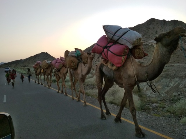 Camels along the road back from Danakil in Afar, Ethiopia